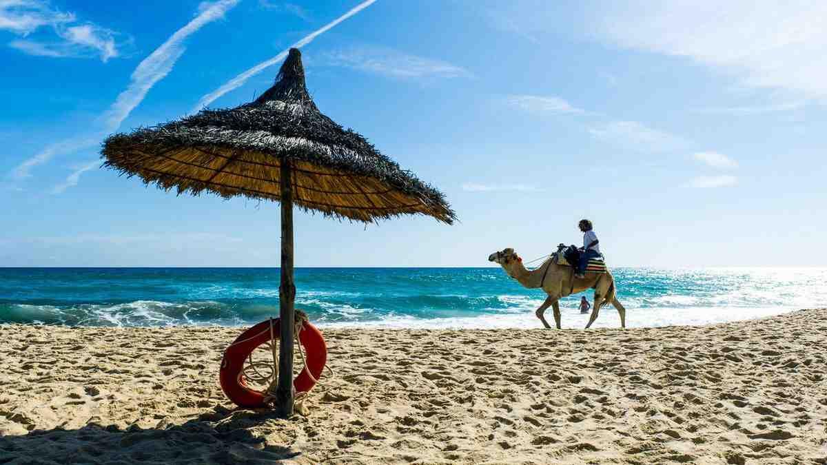 Quand votre livre de vacances paie-t-il moins cher ?